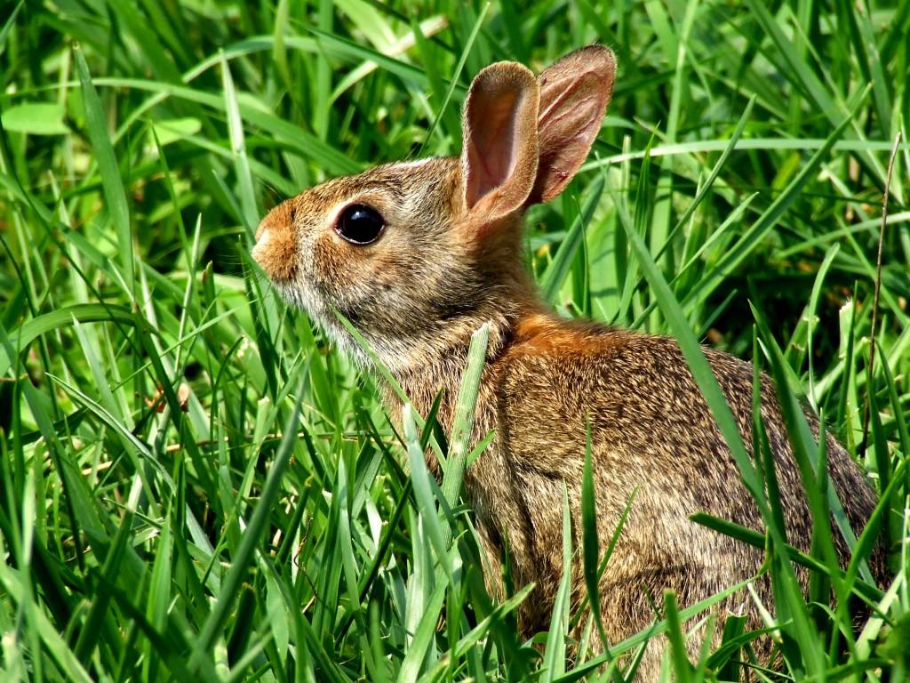 Lapin carnet - Cuisiner un lapin de garenne ...