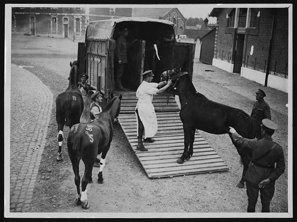 Des chevaux montent dans une ambulance équine.