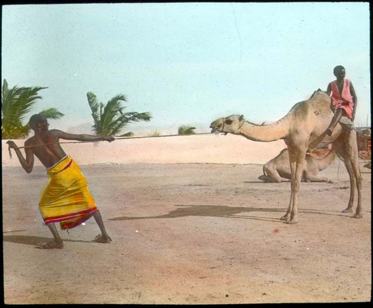 Un homme tire un chameau attaché à une corde.