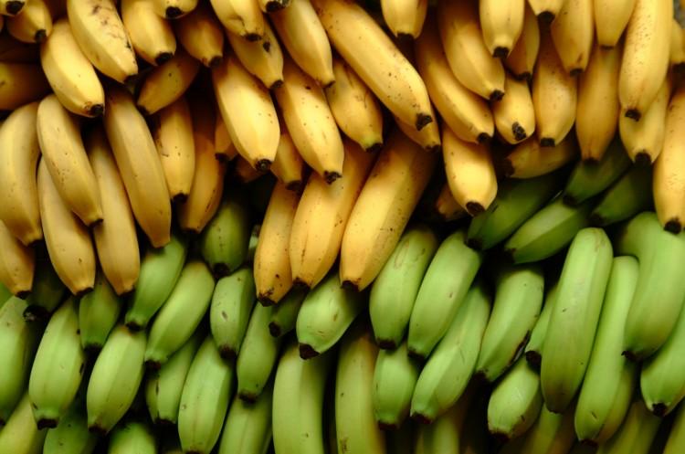 Bananes vertes et jaunes.